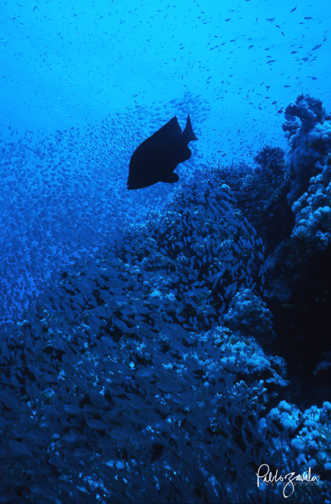 Dahab_The_Canyon_Egipto_Crystalfish_Pablo_Zavala-21
